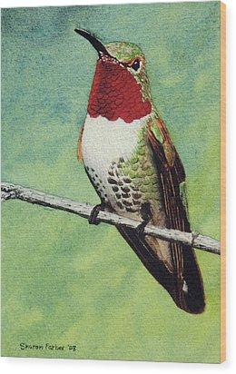 Broad-tailed Hummingbird Wood Print by Sharon Farber