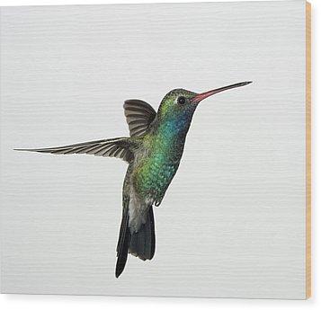 Broadbill Hummingbird In Flight Wood Print by Gregory Scott