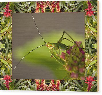 Bromeliad Grasshopper Wood Print by Bell And Todd