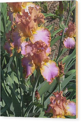 Bronze Iris Wood Print by Lois Mountz