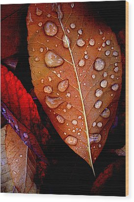 Bronzed Leaf Wood Print by The Forests Edge Photography - Diane Sandoval