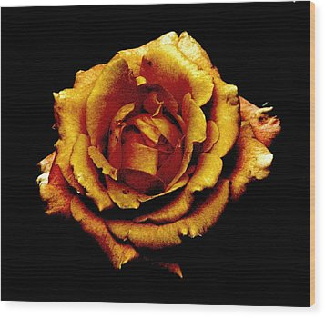 Bronzed Rose Wood Print by Angela Davies