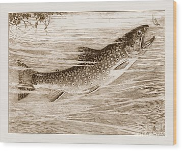 Brook Trout Going After A Fly Wood Print by John Stephens