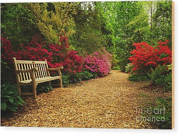 Brookside Gardens Wood Print by Olivia Hardwicke