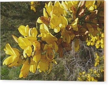 Broom In Bloom Wood Print