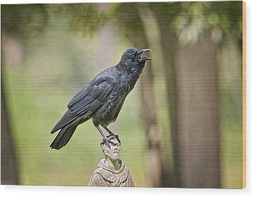 Brother Crow On St. Francis' Head Wood Print by Bonnie Barry