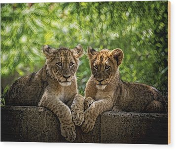 Wood Print featuring the photograph Brothers Chillin by Cheri McEachin