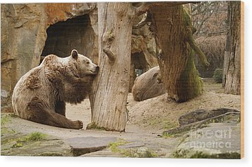 Wood Print featuring the photograph Brown Bears by Louise Fahy