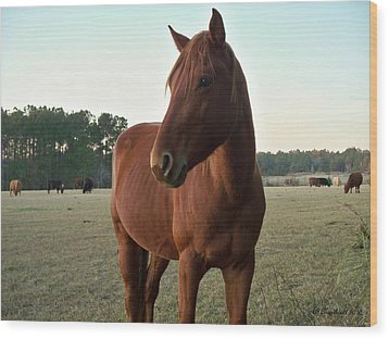 Wood Print featuring the photograph Brown Beauty by Betty Northcutt