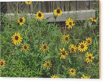 Brown Eyed Susans Wood Print by Robyn Stacey