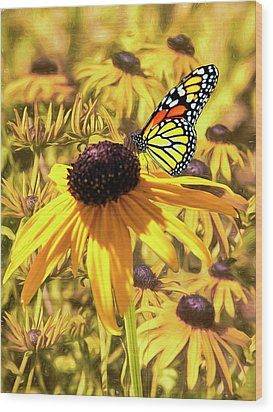 Brown Eyed Susens And The Monarch Wood Print by Diane Schuster