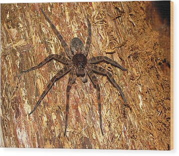 Brown Fishing Spider Wood Print by Joshua Bales