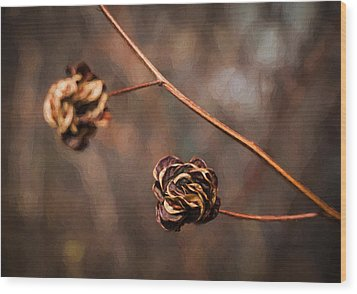 Brown Flower Seed Wood Print