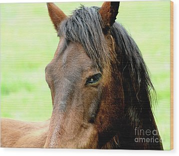 Brown Horse With Sultry Eye . R5907 Wood Print by Wingsdomain Art and Photography