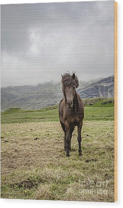 Wood Print featuring the photograph Brown Icelandic Horse by Edward Fielding