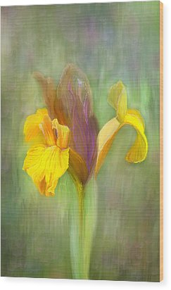 Brown Iris Wood Print by Angela A Stanton