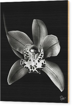 Brown Orchid In Black And White Wood Print
