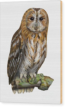 Wood Print featuring the painting Brown Owl Or Eurasian Tawny Owl  Strix Aluco - Chouette Hulotte - Carabo Comun -  Nationalpark Eifel by Urft Valley Art