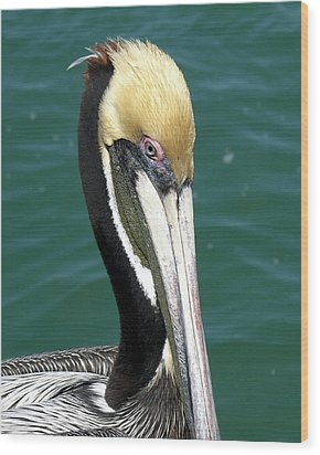 Brown Pelican  Wood Print by Allan  Hughes