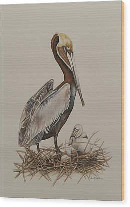 Brown Pelican And Chicks Wood Print by Laurie Tietjen
