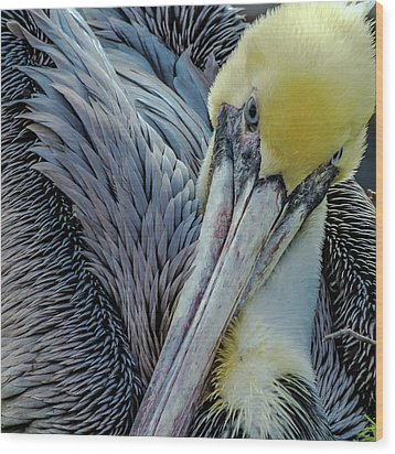 Wood Print featuring the photograph Brown Pelican by Bill Gallagher
