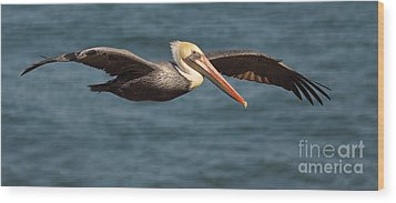 Brown Pelican Flying By Wood Print
