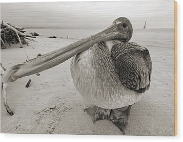 Brown Pelican Folly Beach Morris Island Lighthouse Close Up Wood Print by Dustin K Ryan