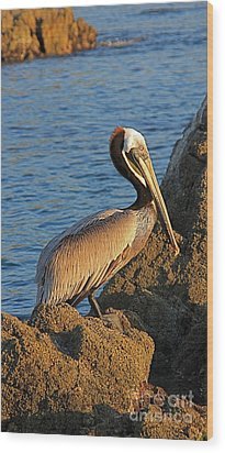Wood Print featuring the photograph Brown  Pelican by Nicola Fiscarelli