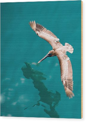 Brown Pelican Offshore Wood Print by Bill Perry