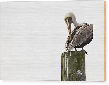 Wood Print featuring the photograph Brown Pelican On Piling by Bob Decker