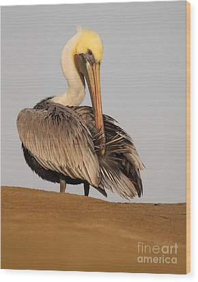 Wood Print featuring the photograph Brown Pelican Preening Feathers On Shifting Sands by Max Allen
