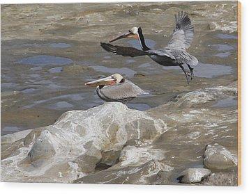 Brown Pelicans At La Jolla Cove Wood Print