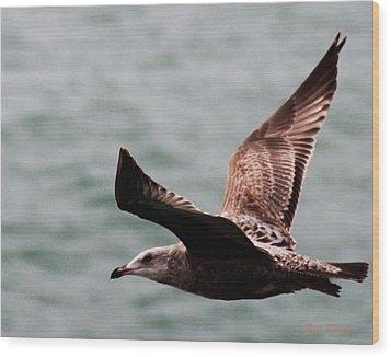 Brown Sea Gull Offshore Wood Print by Bill Perry