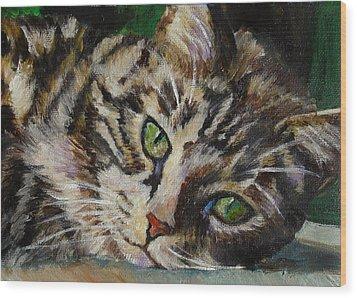 Brown Tabby Cat Wood Print