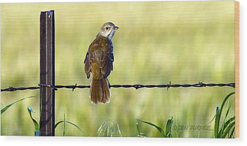 Wood Print featuring the photograph Brown Thrasher by Don Durfee