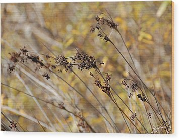 Brown Wildgrass Wood Print by Jean Booth