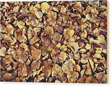 Wood Print featuring the photograph Browning Leaves by Glenn McCarthy Art and Photography