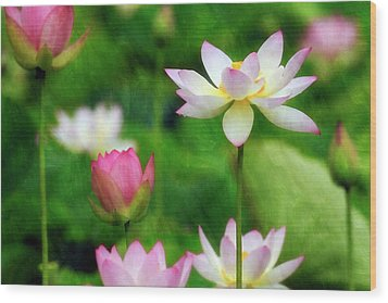 Wood Print featuring the photograph Brushed Lotus by Edward Kreis