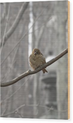 Bryant Park Bird Nyc Wood Print