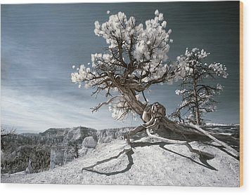 Bryce Canyon Infrared Tree Wood Print