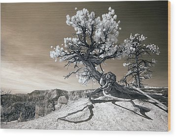 Bryce Canyon Tree Sculpture Wood Print