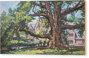 Bryn Mawr Tree Wide Reach Wood Print by Thor Wickstrom