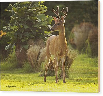 Wood Print featuring the photograph Buck by Angel Cher