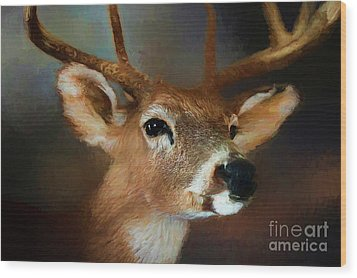 Wood Print featuring the photograph Buck by Darren Fisher
