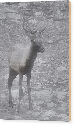 Buck In Fog On Hurricane Ridge - Olympic National Forest - Olympic National Park Wa Wood Print by Christine Till