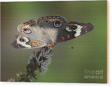 Buckeye Beauty Wood Print by Anita Oakley