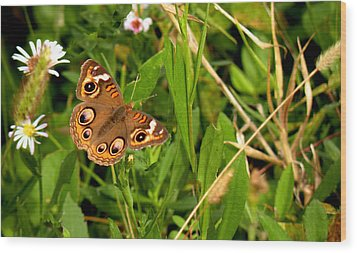 Wood Print featuring the photograph Buckeye Butterfly In Nature by Rosalie Scanlon