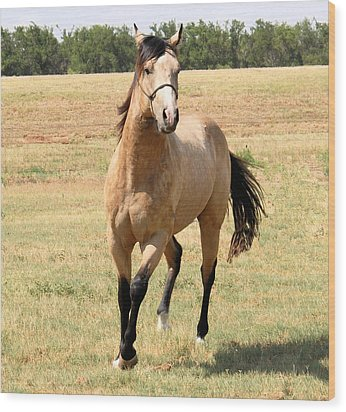 Buckskin Stallion From Front Wood Print