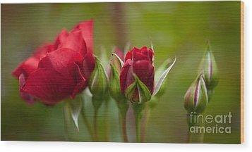 Bud Bloom Blossom Wood Print by Mike Reid