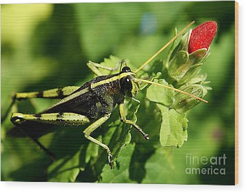 Wood Print featuring the photograph Bud Hopper by DiDi Higginbotham